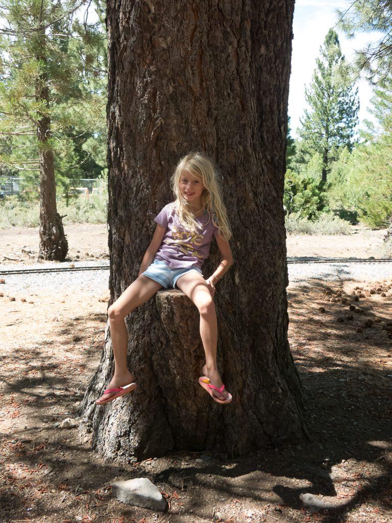 Adria climbing tree (stumps)