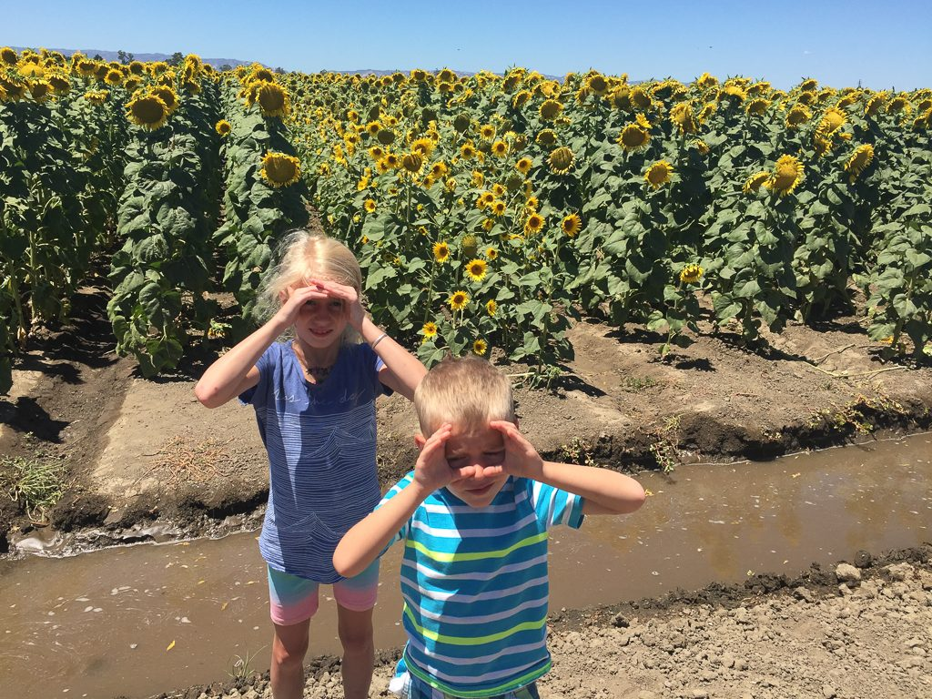 Roadside stop to admire the sunflowers